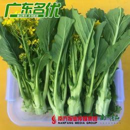 【珠三角包邮】增城迟菜心 5斤±2两/筐 (1月16日到货)