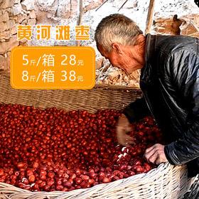 【黄河滩枣5斤】| 个大肉厚,酸甜味美,香味浓郁,色如墨玉,是色、香、味、形俱全的红枣