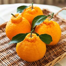 一小时热卖10000件网红不知火丑橘  爆汁超好吃 现摘现发