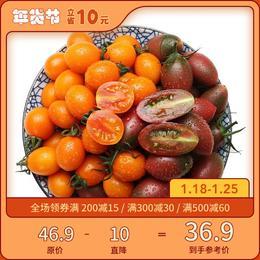 [紫葡萄+小番茄]拼着吃更有意思 3斤装